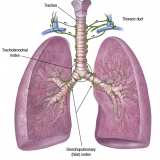 PULMONARY LYMPH NODES